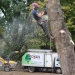 Trojan Tree Care