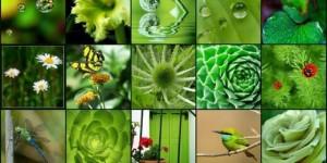 All Green Gardening