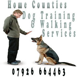 Home Counties Dog Training