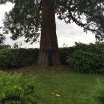 Sevenoaks Tree Care