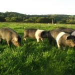 Romshed Farm